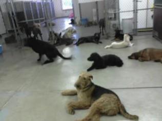 our yakima wa pet care facility little paws playhouse